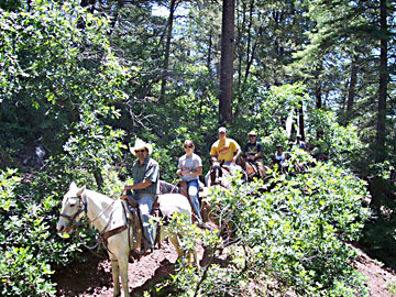 trail riding in the woods